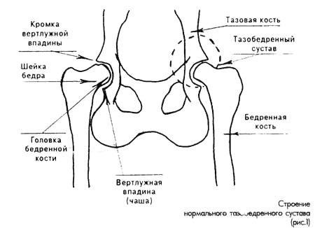 Анатомия и физиология собаки -Разные документы