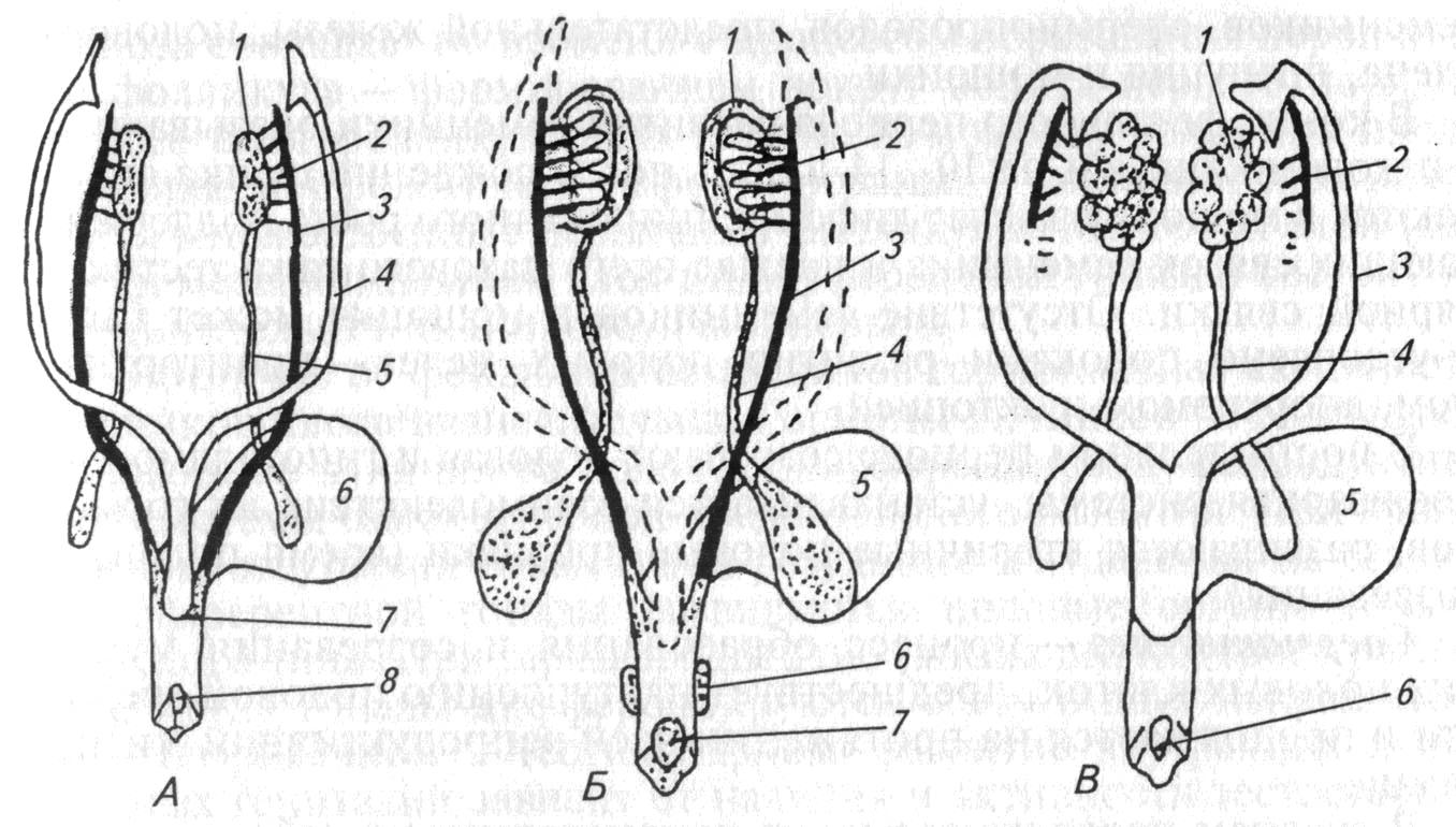 Движения половых органов при половом акте фото 415-5
